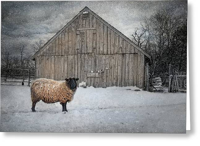 Sheep Greeting Cards - Sweater Weather Greeting Card by Robin-lee Vieira