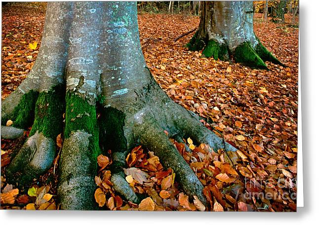 Swedish Beech Forest Greeting Card by Inge Johnsson