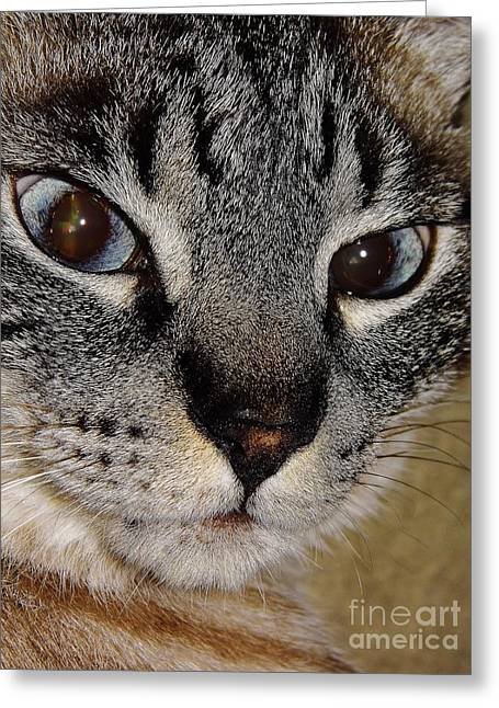 House Pet Greeting Cards - Cat - Sweet - Boy Greeting Card by D Hackett