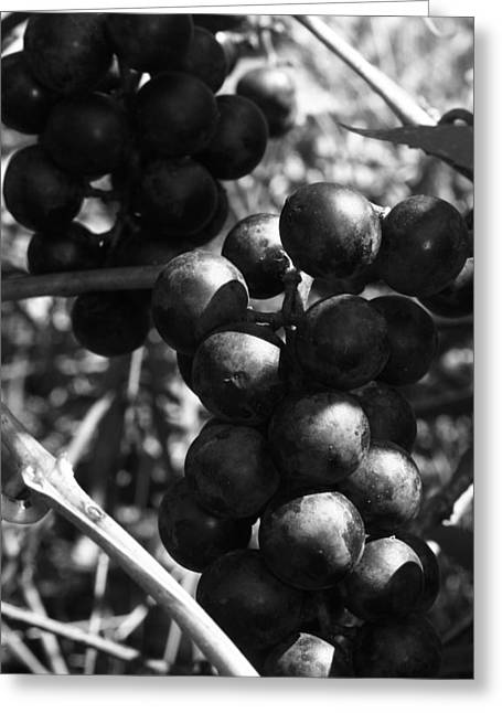 Concord Grapes Greeting Cards - Sweet Bunch - Concord II Greeting Card by RC Hagy