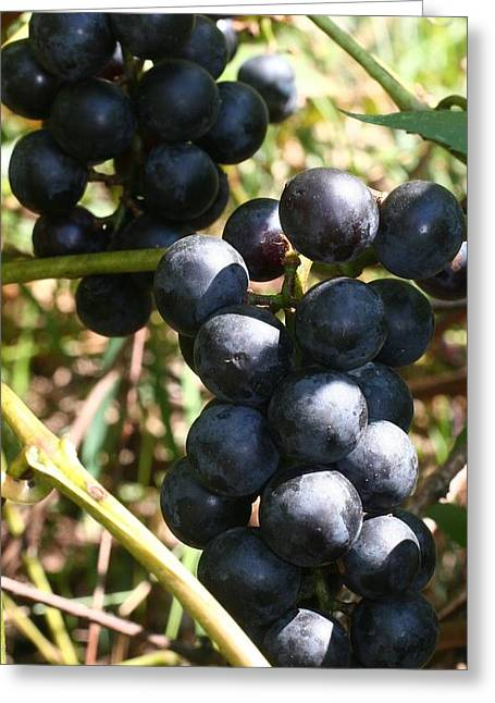 Concord Grapes Greeting Cards - Sweet Bunch - Concord Greeting Card by RC Hagy