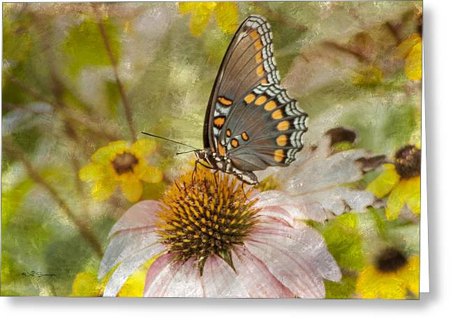 Sweet Butterfly Greeting Card by Jeff Swanson
