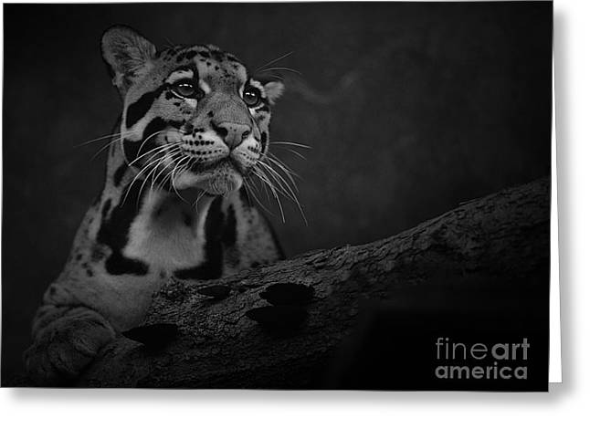 Photos Of Cats Photographs Greeting Cards - Sweet Clouded Face Greeting Card by Adrian Tavano