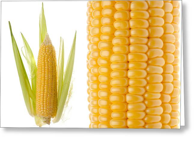 Corn Pyrography Greeting Cards - Sweet corn Greeting Card by Pavlo Kolotenko