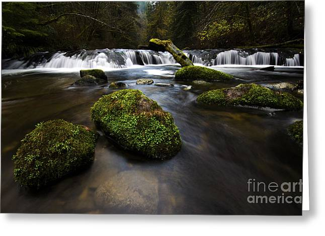 Greeting Cards - Sweet Creek Oregon 10 Greeting Card by Bob Christopher