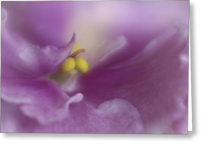African Violets Greeting Cards - Sweet Dreams Greeting Card by David and Carol Kelly