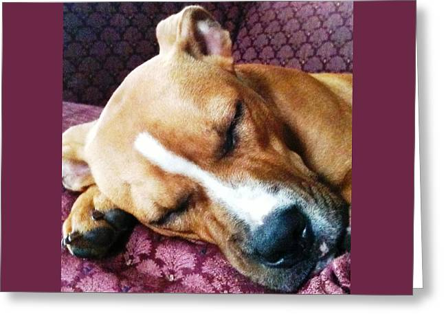 Pitty Greeting Cards - Sweet Dreams Greeting Card by Debbie Finley