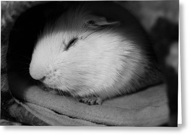 Cavy Greeting Cards - Sweet Dreams Greeting Card by Luke Moore