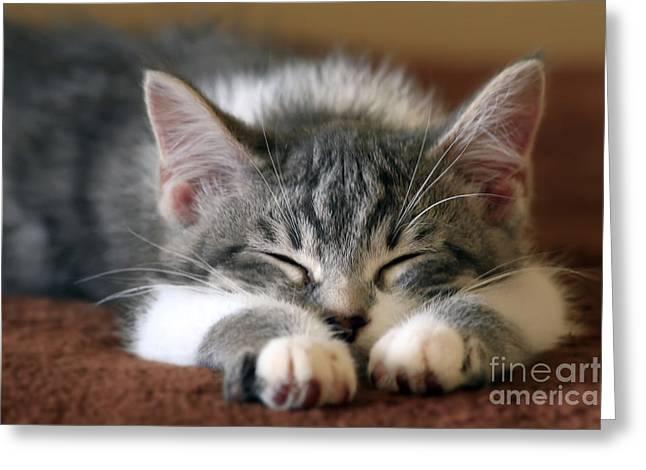 Sweet Dreams Greeting Card by Teresa Zieba