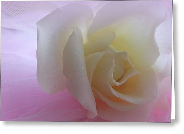 White Roses Greeting Cards - Sweet Dreams Greeting Card by  The Art Of Marilyn Ridoutt-Greene