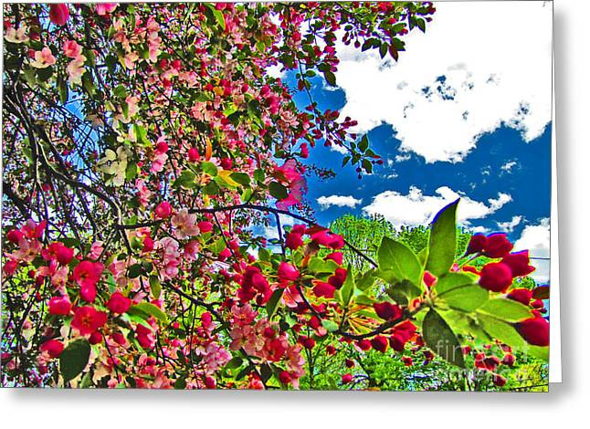 Color Enhanced Greeting Cards - Sweet Escape Greeting Card by Minding My  Visions by Adri and Ray