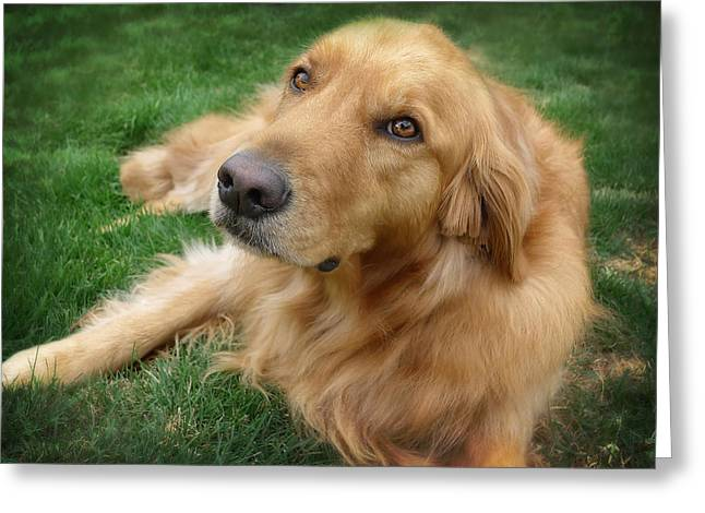Puppy Dog Eyes Greeting Cards - Sweet Golden Retriever Greeting Card by Larry Marshall