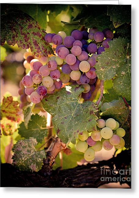Grape Vineyard Greeting Cards - Sweet Grapes Greeting Card by Ana V  Ramirez