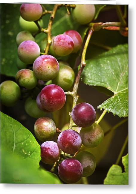 Sour Greeting Cards - Sweet Grapes Greeting Card by Christina Rollo
