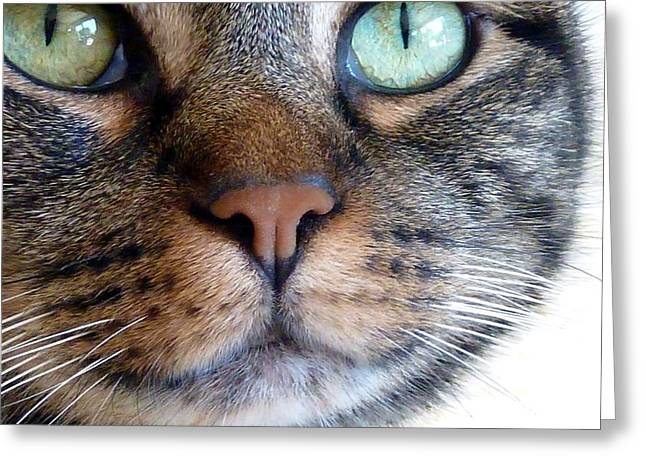 Sweet Green Eyes Greeting Card by Patricia Strand