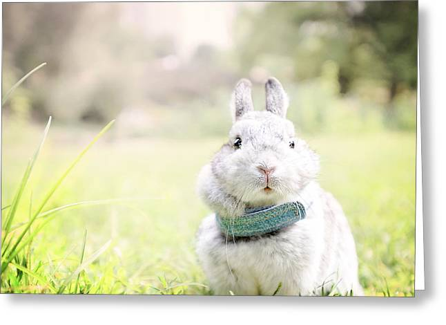 Adorable Bunny Greeting Cards - Sweet Little bunny Greeting Card by Vicki Jauron