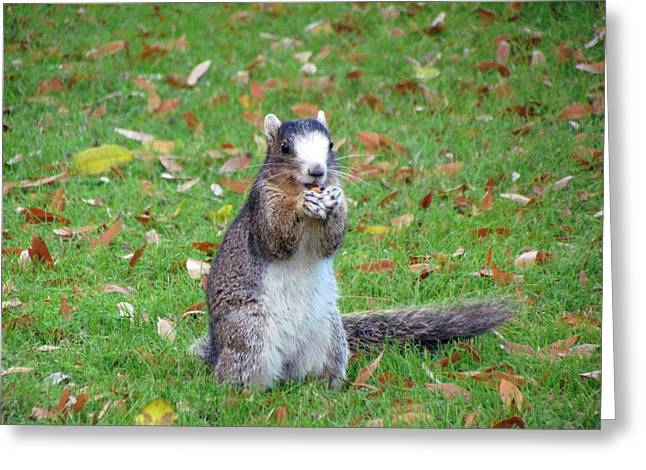 Fox Squirrel Greeting Cards - Sweet Little Fella  Greeting Card by Cynthia Guinn