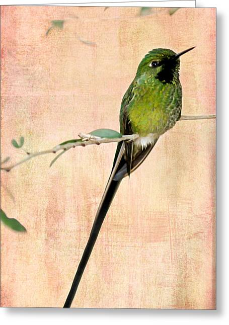 Wow Greeting Cards - Sweet Long Tailed Hummingbird Greeting Card by Sabrina L Ryan