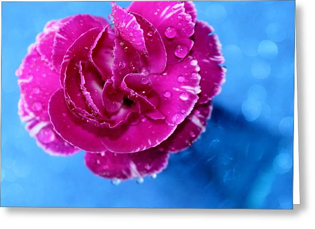 Pink Carnations Greeting Cards - Sweet Love Greeting Card by Krissy Katsimbras