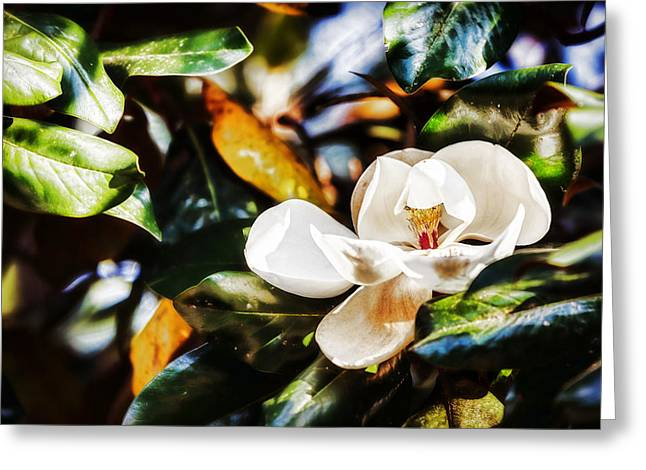 Patterned Greeting Cards - Sweet Magnolia Blossom Greeting Card by Sennie Pierson