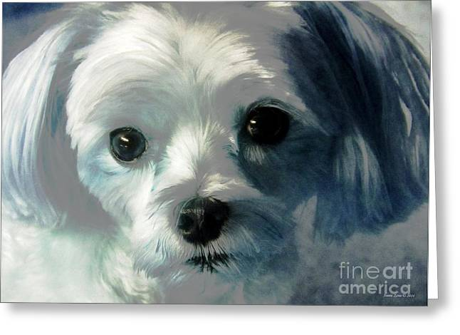 Toy Maltese Photographs Greeting Cards - Sweet Maltese Greeting Card by Annie Zeno