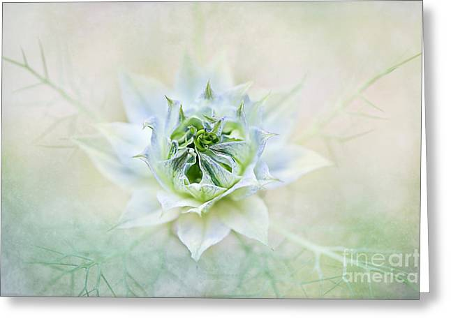 Damascena Greeting Cards - Sweet Mist Greeting Card by Jacky Parker