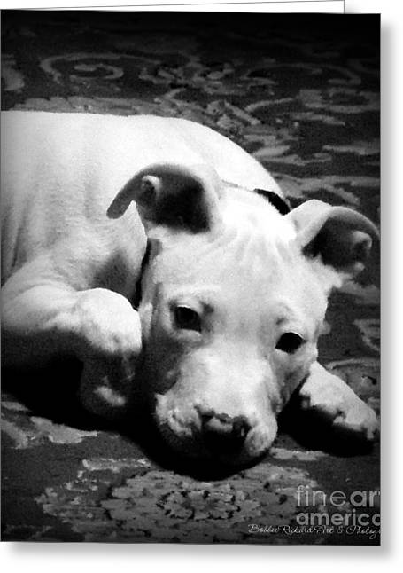 Framed Pit Bull Print Greeting Cards - Sweet Moment Greeting Card by Bobbee Rickard