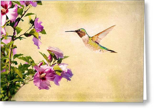 Spider And Fly Greeting Cards - Sweet Nectar Greeting Card by Sennie Pierson