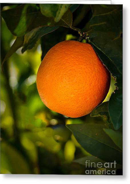Haybale Greeting Cards - Sweet Orange Greeting Card by Robert Bales