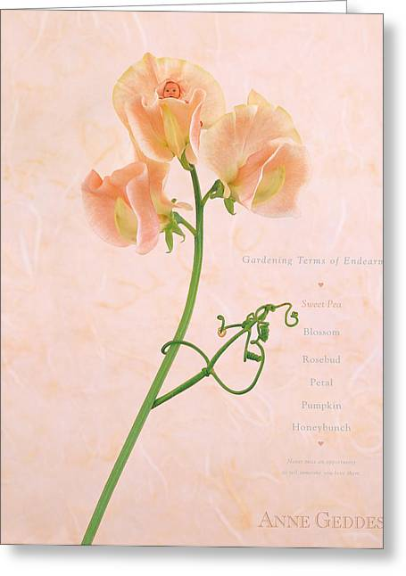Babies Greeting Cards - Sweet Pea Greeting Card by Anne Geddes