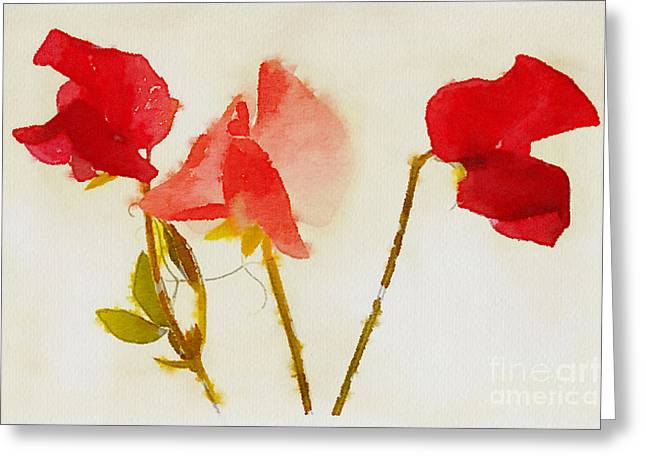 Pink Sweet Peas Greeting Cards - Sweet Pea Watercolour Greeting Card by John Edwards