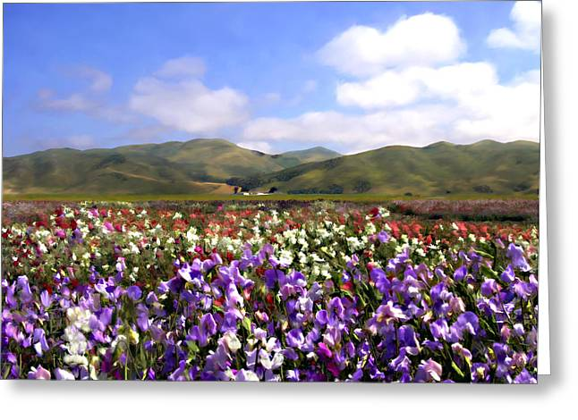 Sweet Peas Galore Greeting Card by Kurt Van Wagner