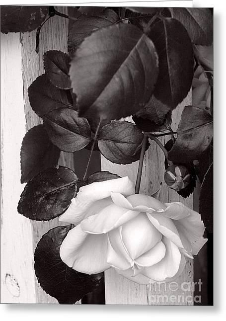 Sweet Petals Greeting Card by Avis  Noelle