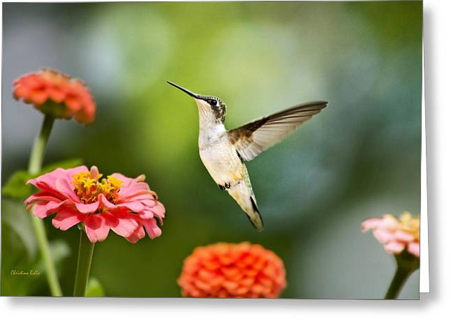 Hovering Greeting Cards - Sweet Promise Hummingbird Greeting Card by Christina Rollo