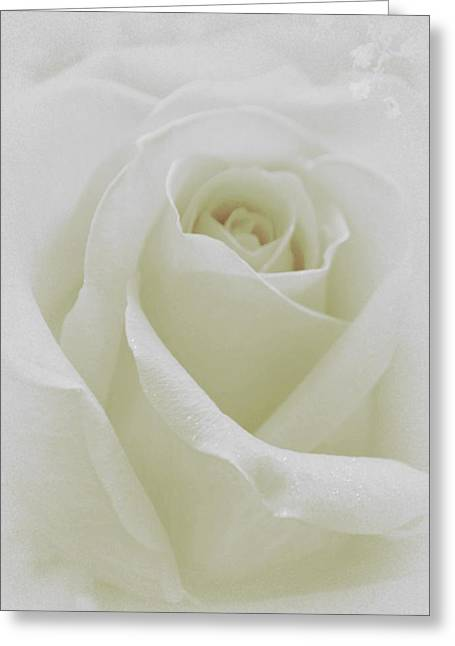 White Roses Greeting Cards - Sweet Purity Greeting Card by  The Art Of Marilyn Ridoutt-Greene