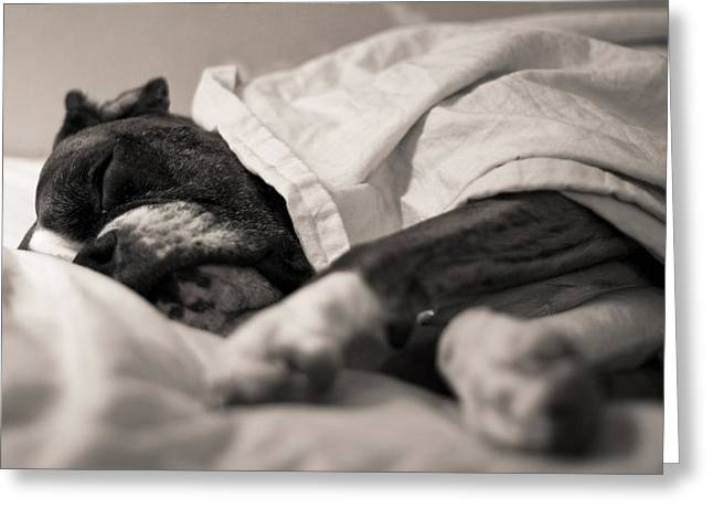 Boxer Print Greeting Cards - Sweet Sleeping Boxer Greeting Card by Stephanie McDowell
