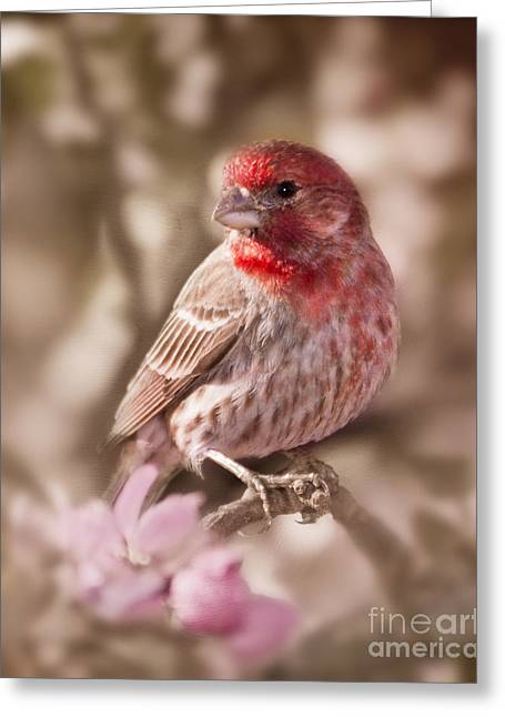 Pink Flower Branch Greeting Cards - Sweet Songbird Greeting Card by Betty LaRue