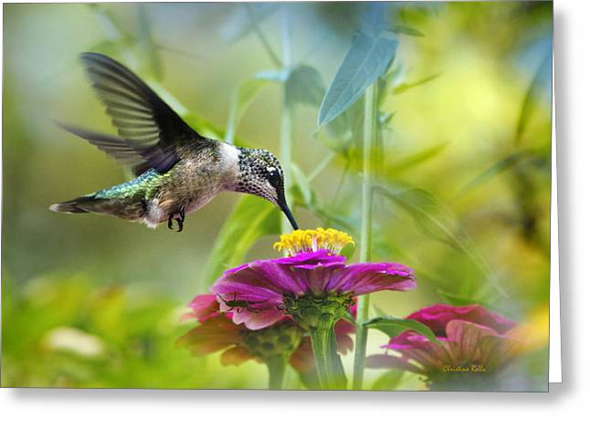 Ruby Throated Hummingbird Greeting Cards - Sweet Success Greeting Card by Christina Rollo