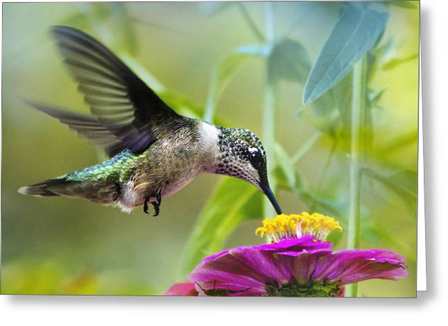 Birds With Flowers Greeting Cards - Sweet Success Hummingbird Square Greeting Card by Christina Rollo