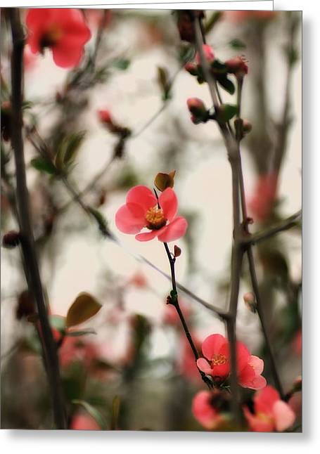 Quince Greeting Cards - Sweet-Tempered Greeting Card by Heather Bridenstine