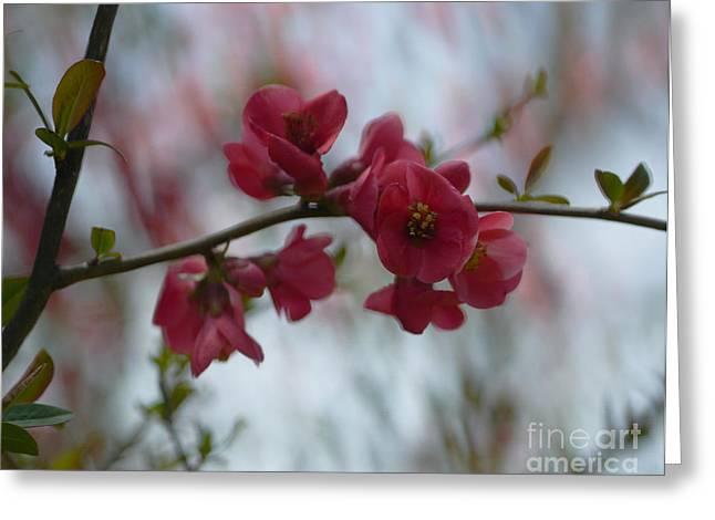 Quince Greeting Cards - Sweet Temptation Greeting Card by Irina Wardas