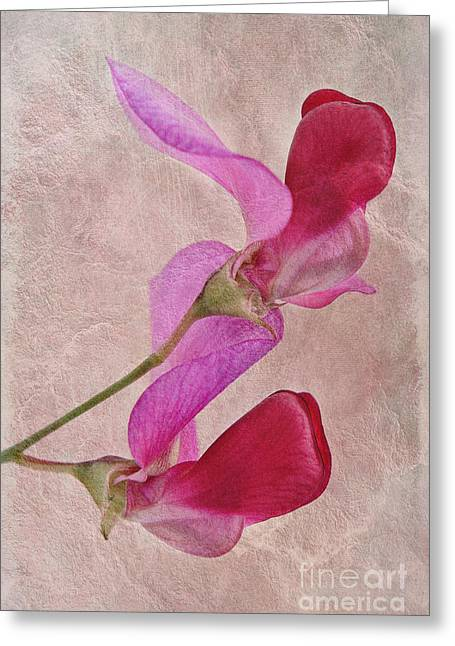 Close Focus Floral Greeting Cards - Sweet Textures 2 Greeting Card by John Edwards