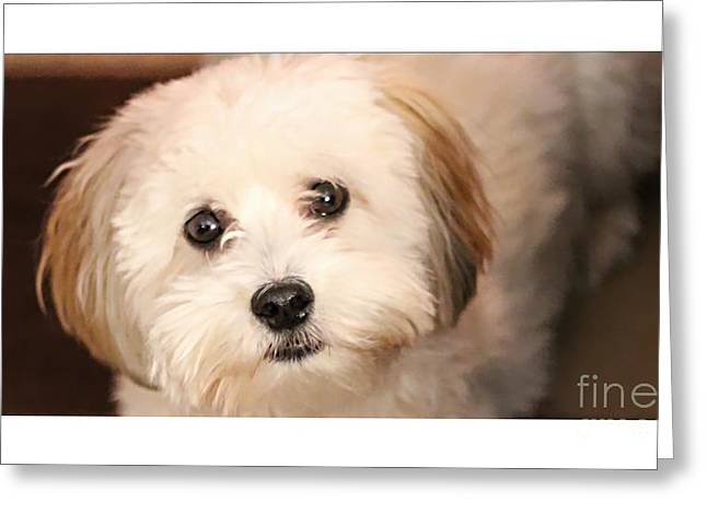 Hypoallergenic Greeting Cards - Sweetest Puppy Dog Eyes Greeting Card by Barbara Griffin