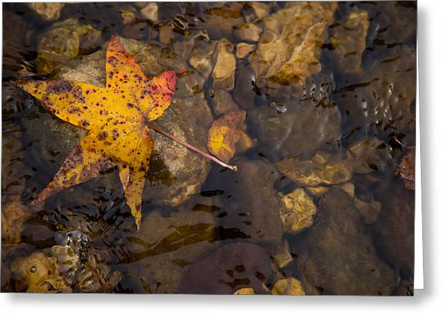 Ozark Mountains Greeting Cards - Sweetgum Greeting Card by Matthew Parks