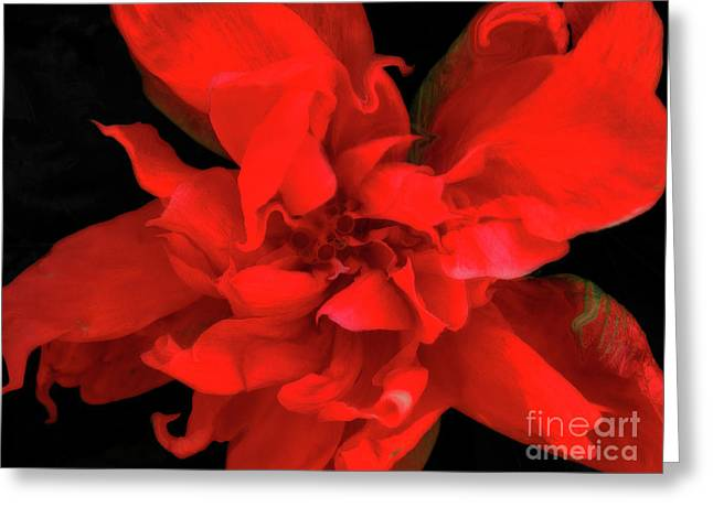 Digitalart Greeting Cards - Sweetheart Greeting Card by Molly McPherson