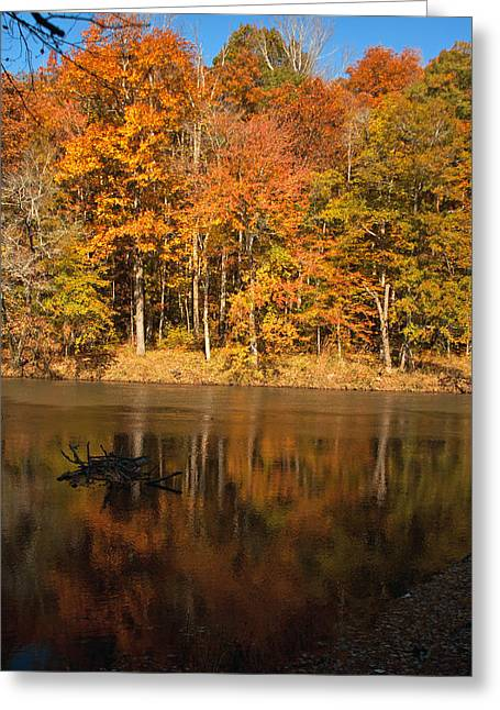 Sweetwater Greeting Cards - Sweetwater Creek Greeting Card by Jamie Anderson