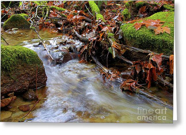 Water In Creek Greeting Cards - Swept Away Greeting Card by Sharon  Talson