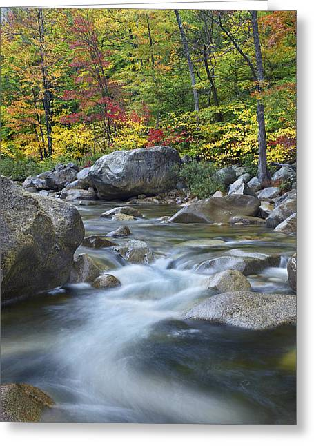 Photos Of Autumn Greeting Cards - Swift River In Fall White Mountains New Greeting Card by Tim Fitzharris
