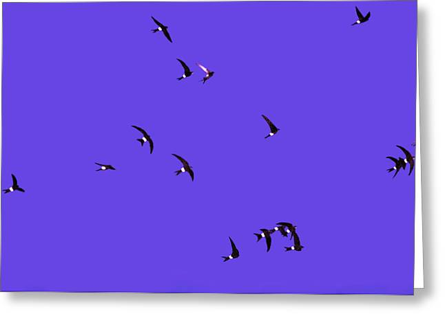 Flying Bird Greeting Cards - Swifts Greeting Card by Anonymous