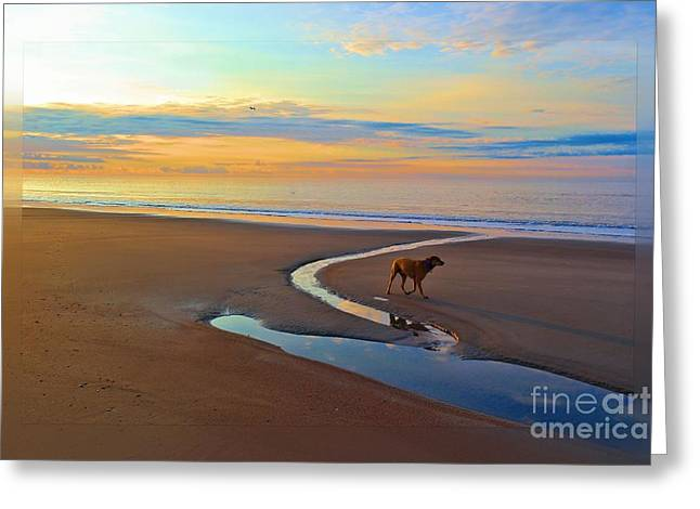 Dog Play Sea Greeting Cards - Swim the sky Greeting Card by Cindy Piper